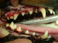歯石の除去後